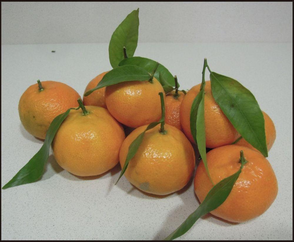 Seasonal Fruits - Mandarines