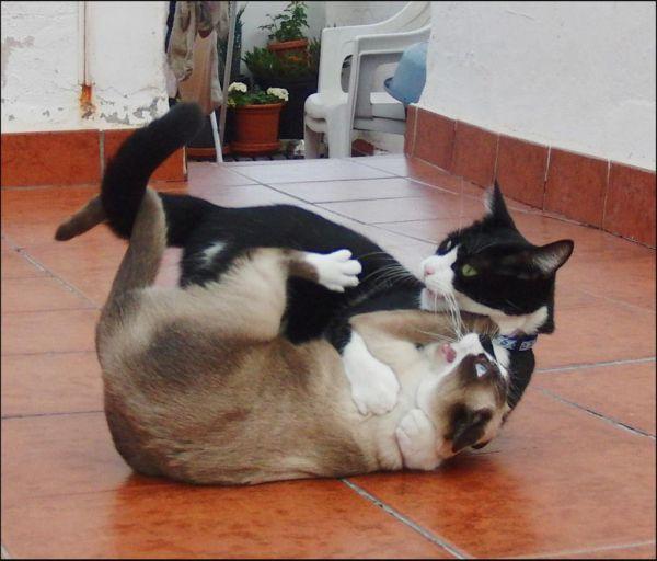 Playful Felix and Xena