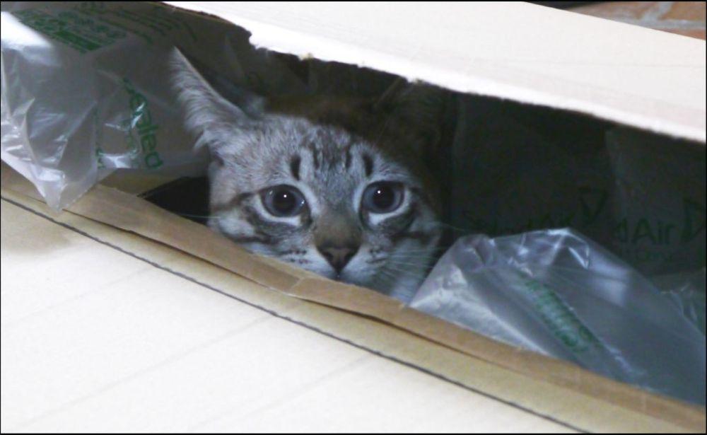 Kirin Hiding in The Box