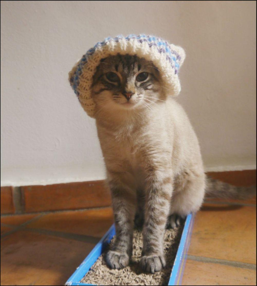 Kirin in Woollen Hat