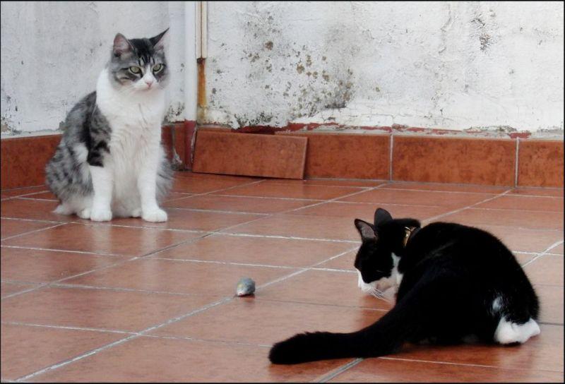 Tor & Felix