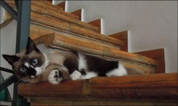 Xena The Birthday Girl Cat
