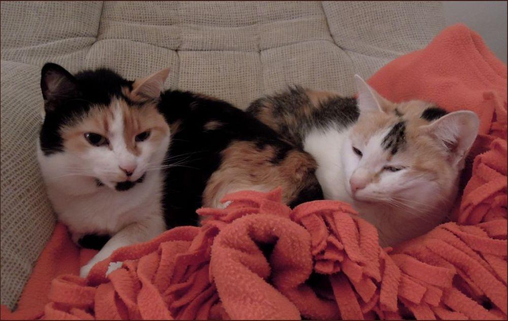 Jodi & Gimo Taking a Nap Peacefully