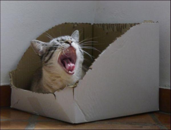 Yawning Kirin
