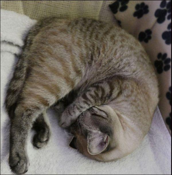 Kirin in a Sound Sleep