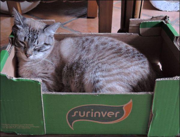 Kirin's Favorite Box to Take a Nap