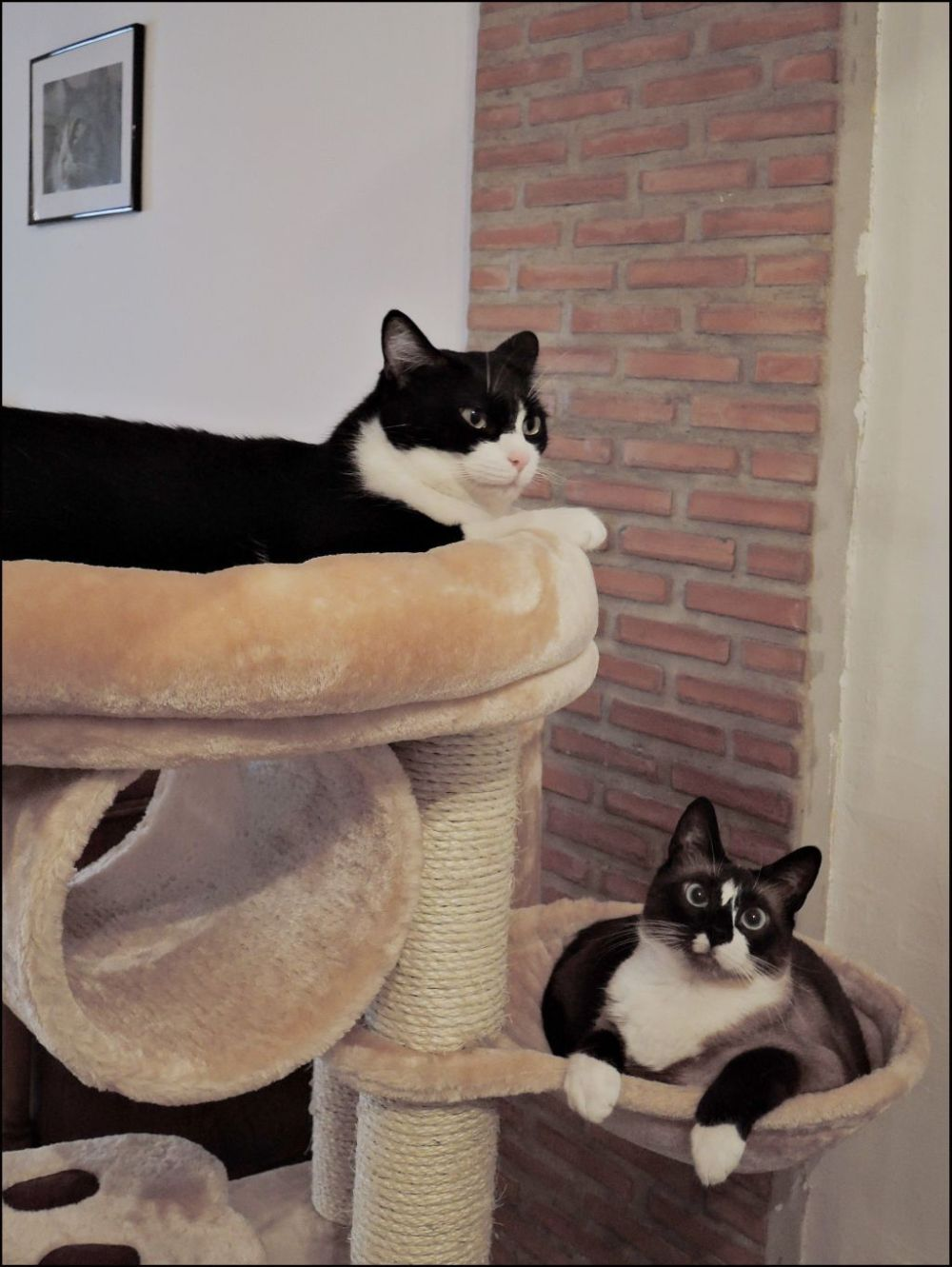 Felix & Xena in The Cat Tower