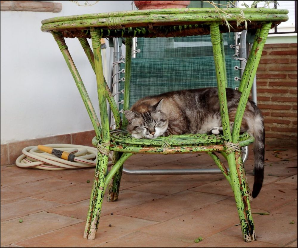Sleeping on A  Bamboo Table in The Shade