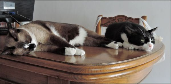 Felix & Xena on The Table Sleeping Together