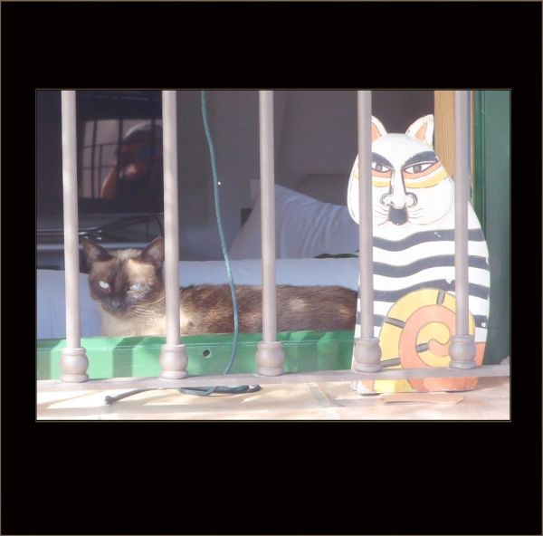 Cats by The Window ( =ノωヽ=)