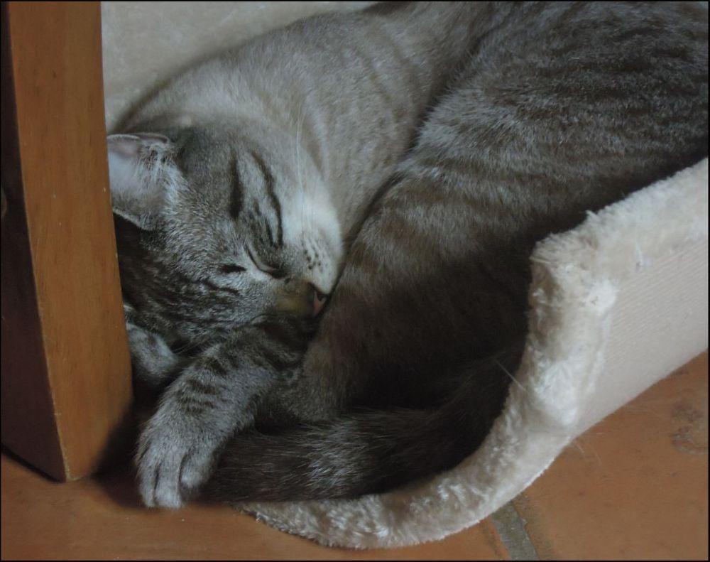 Kirin - Sound Sleep