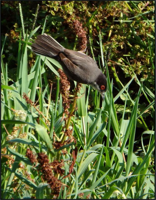 Wild Bird in The Water Grass