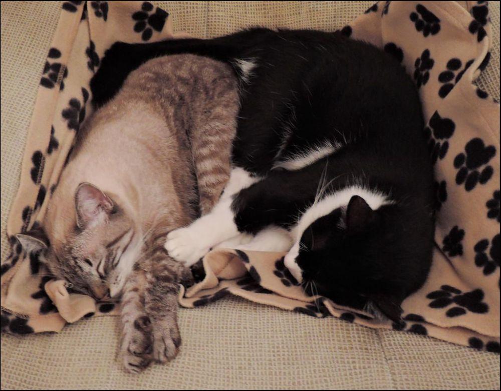 Kirin & Felix