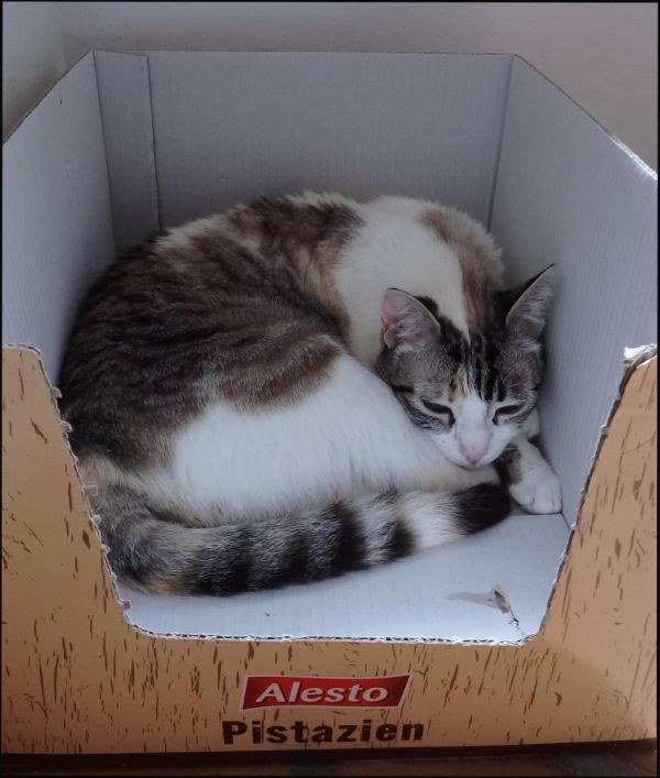 Coco in her Favorite Box