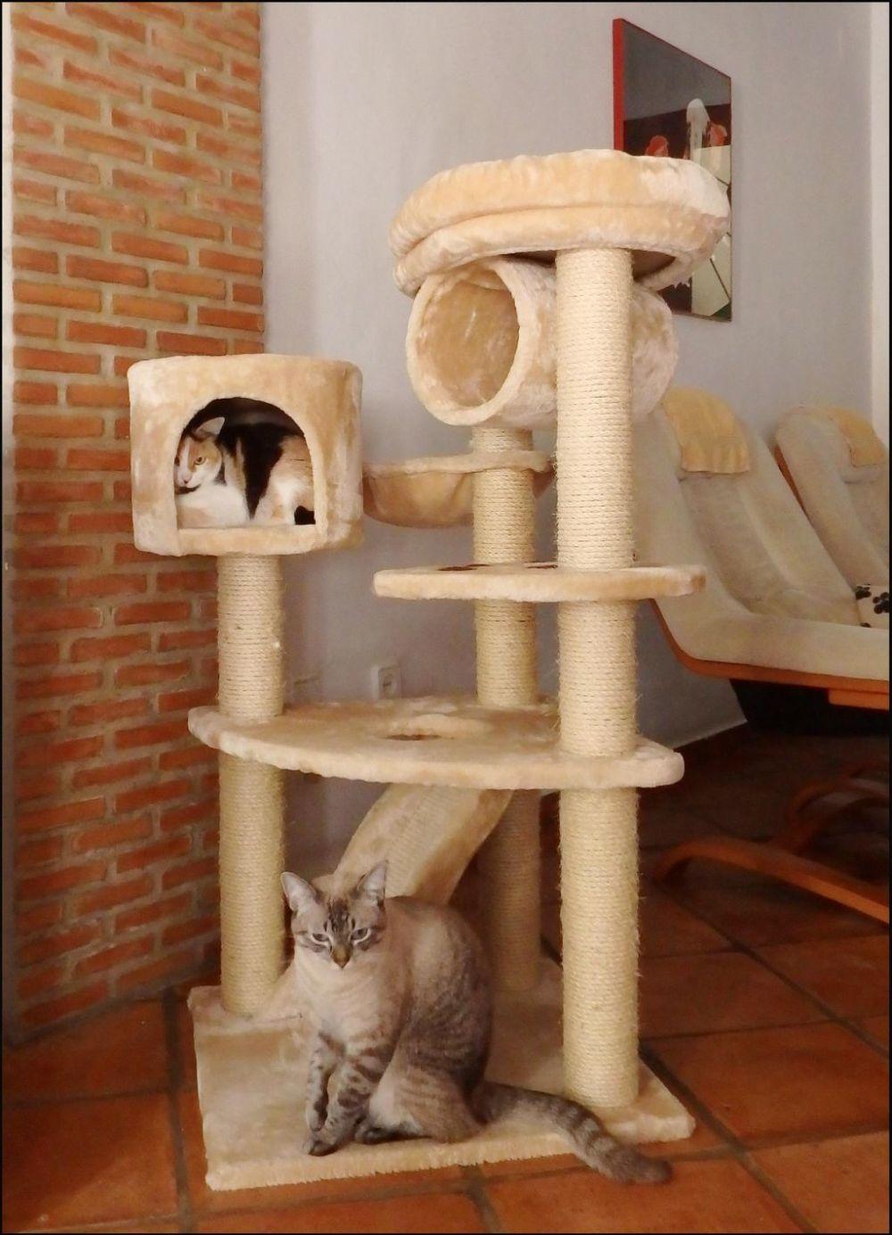 Jodi & Kirin on The Cat Tower