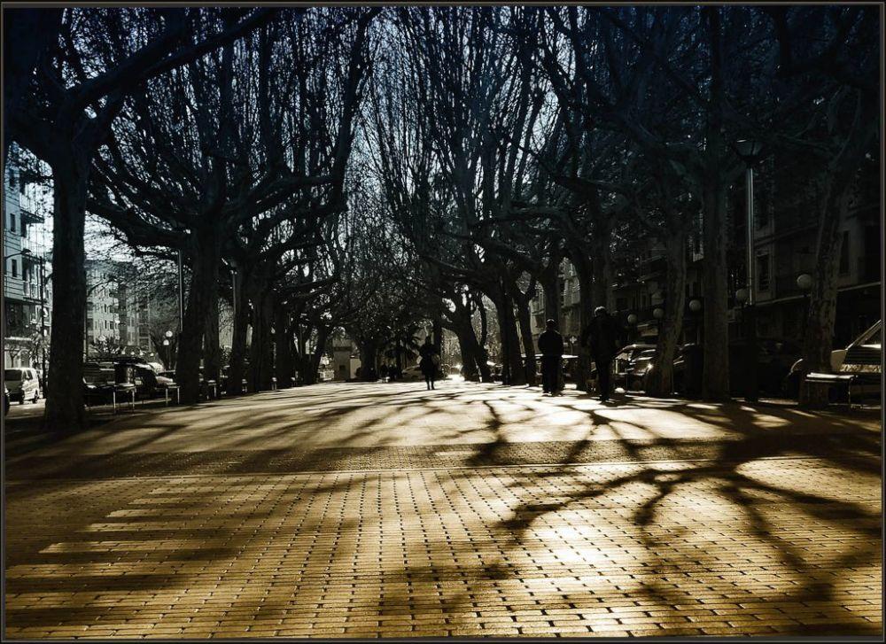 Bare Wood of The Winter Promenade