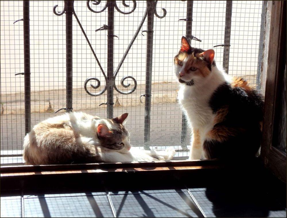 Coco & Jodi Sunbathing on The Window
