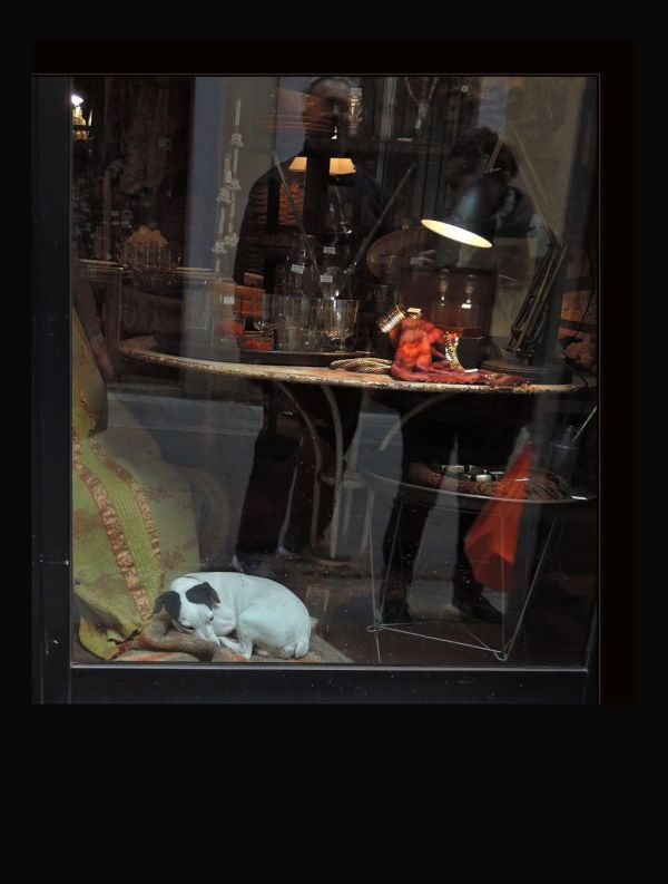 Dog in The Show Window