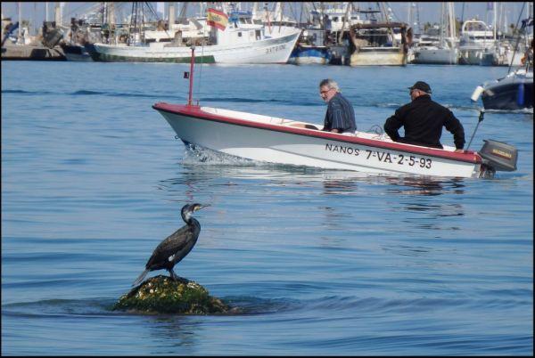 Cormorant at Denia Yacht Harbor