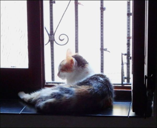 Gimo by The Window