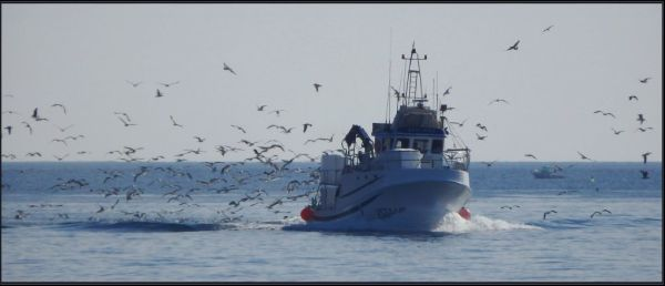 Small Fishing Vessel in Javia Fishing Port