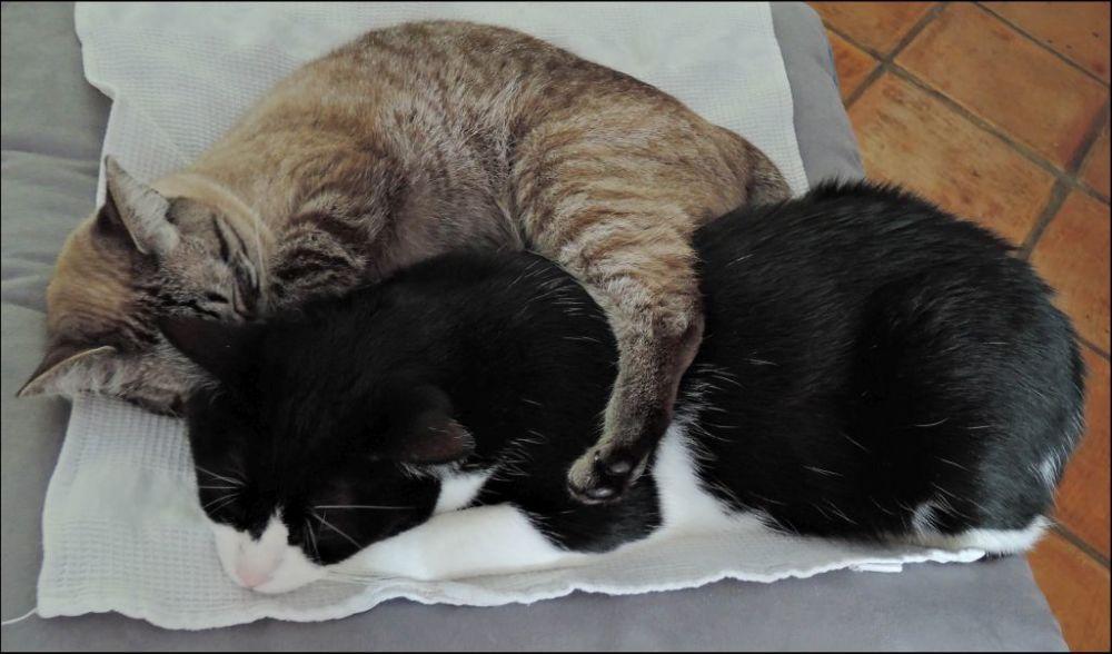 Felix & Kirin Sleeping Together
