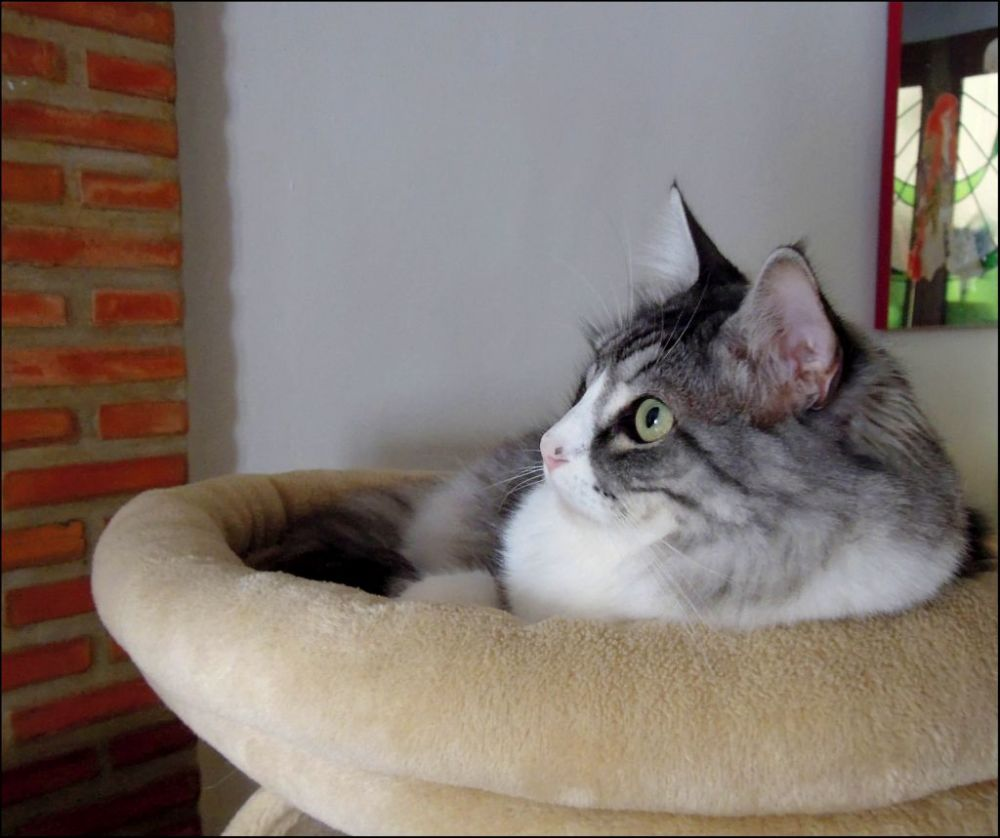 Tor on The Cat Tower ↀᴥↀ^