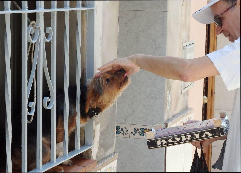 Friendly Dog Nero