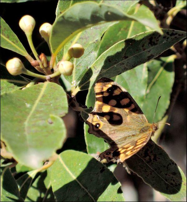 A Butterfly Having A Rest