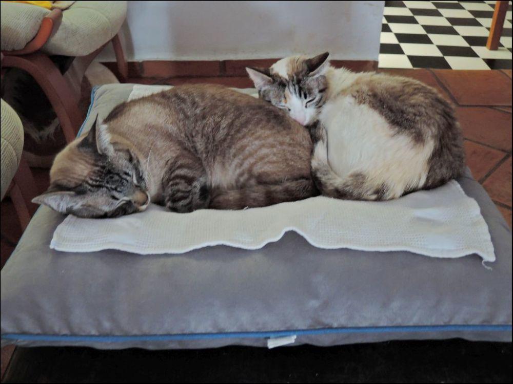 Kirin & Coco  Good Friends   ΦωΦ| (⌯⊙⍛⊙)