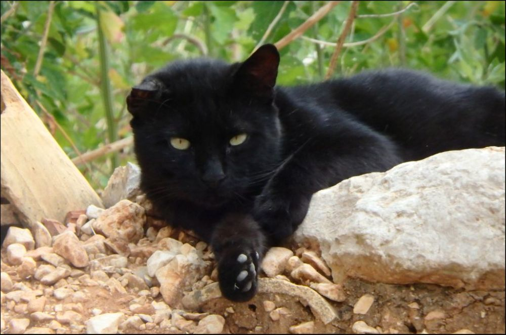 Black Cat in Vacant Land