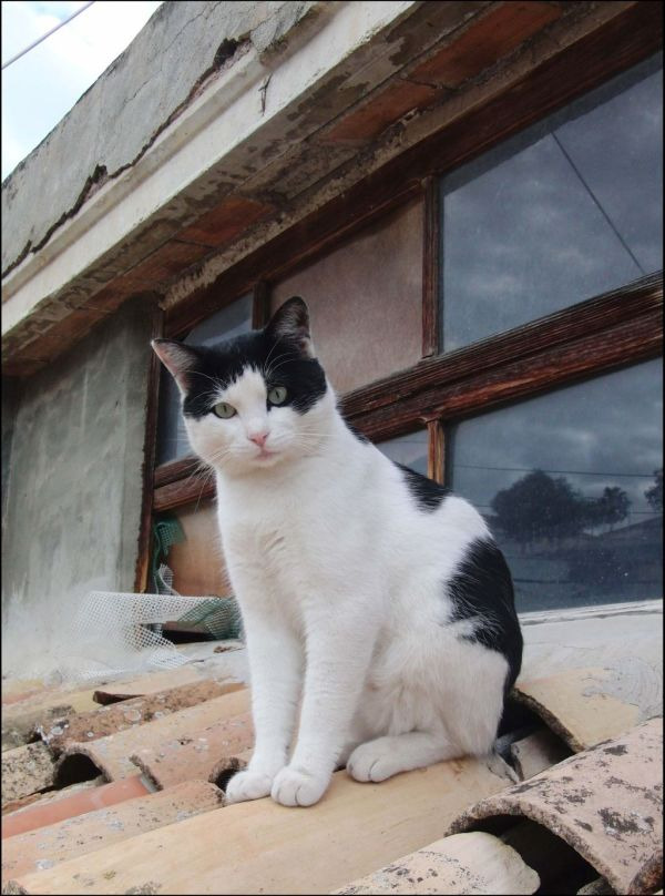 Young Cat on The Terracotta Roof ^ↀᴥↀ^