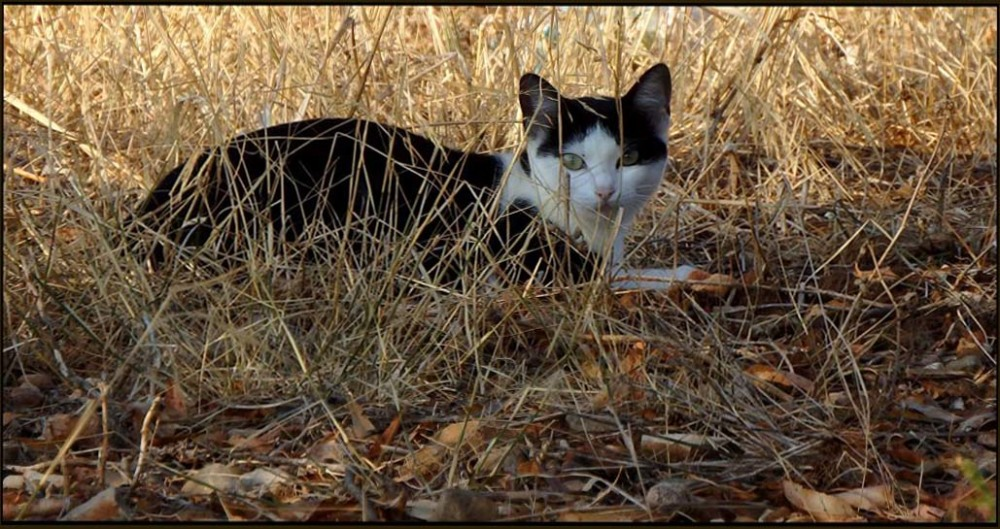 Cat in The Vacant Ground