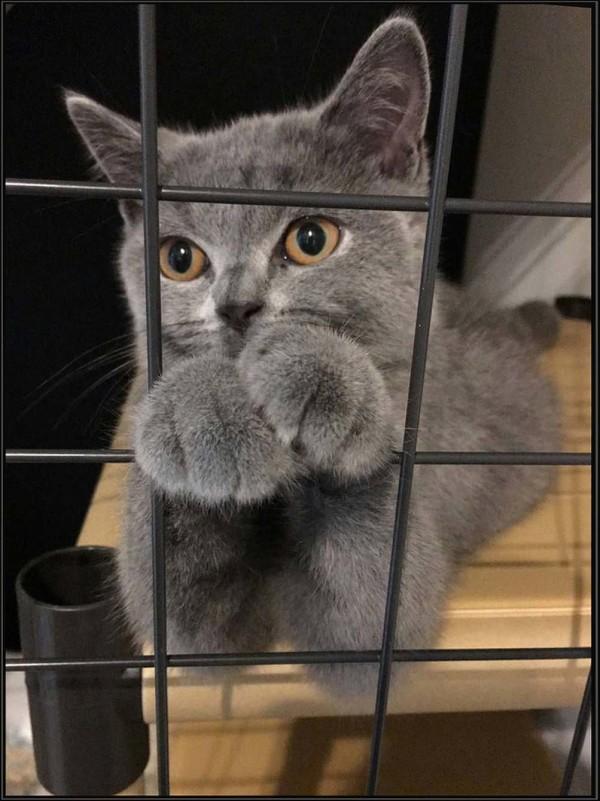 Bri in His Cat Cage  (=^・^=)
