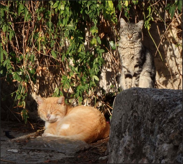 Cats in the Sunny Place (=^・^=)