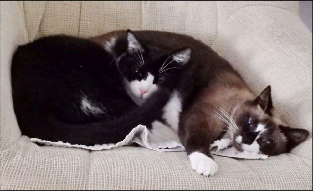 Felix & Xena Good Friends ʘ̥ꀾʘ̥ (ΦёΦ)
