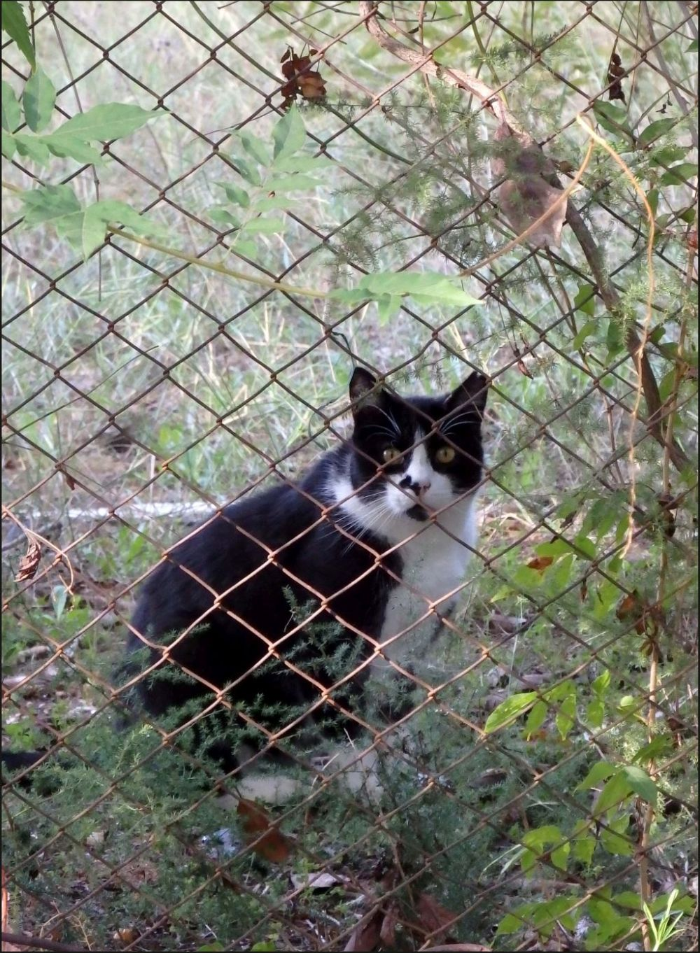 Cat in A Vacant Lot