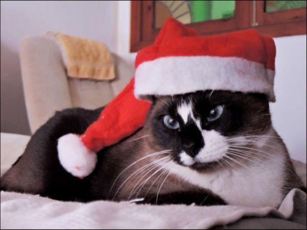 Merry Christmas !!  (=^・^=)