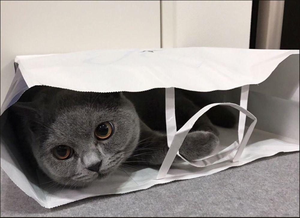 Buri in A Paper Bag