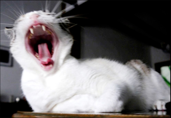 Coco's  Big Yawn