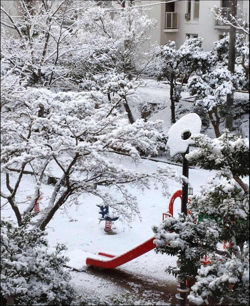 Snowstorm at The Public Park in Osaka