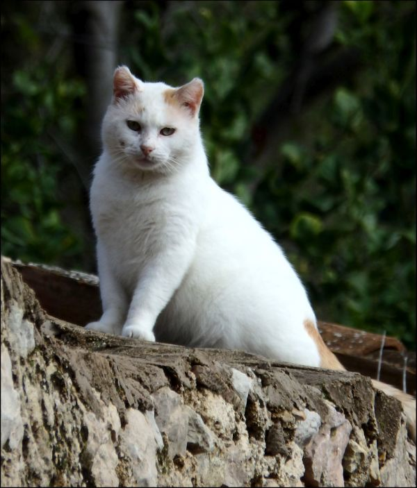 Cat in the Mountain Village of La Forna