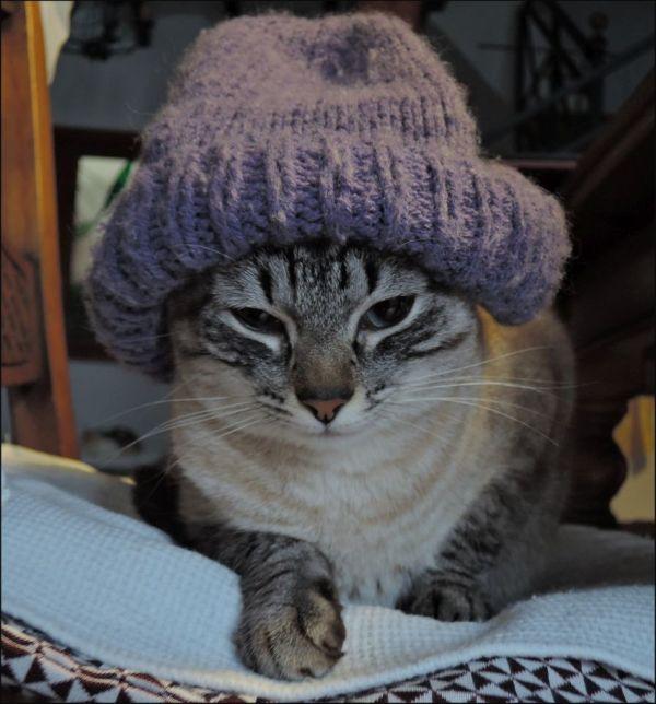 Kirin Wearing a Knitted Cap