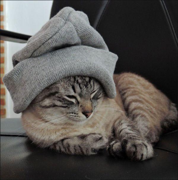 Kirin - New Wooly Hat