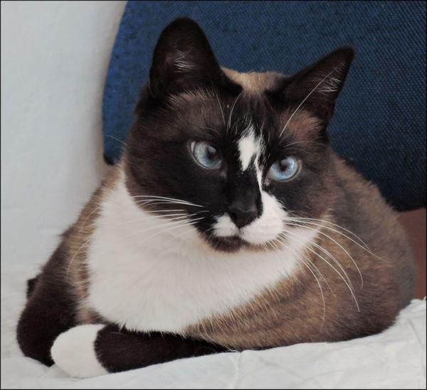 Birthday Cat - Xena  ⁽⁽٩(๑˃̶͈̀ ᗨ ˂̶͈́)۶⁾⁾