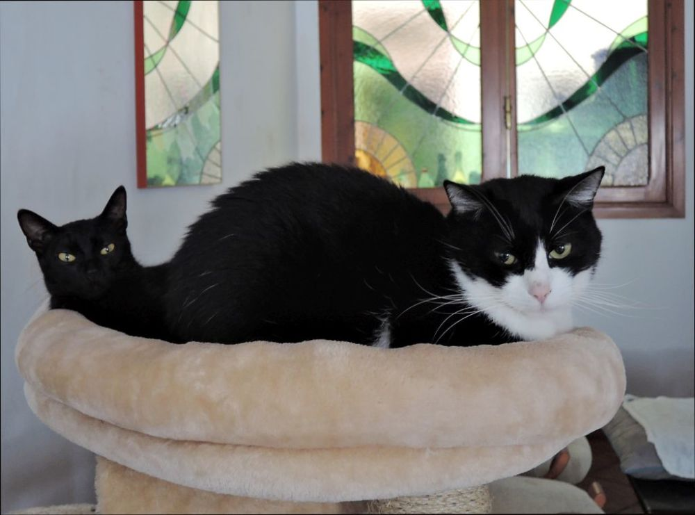 Felix & Mei on The Cat Tower