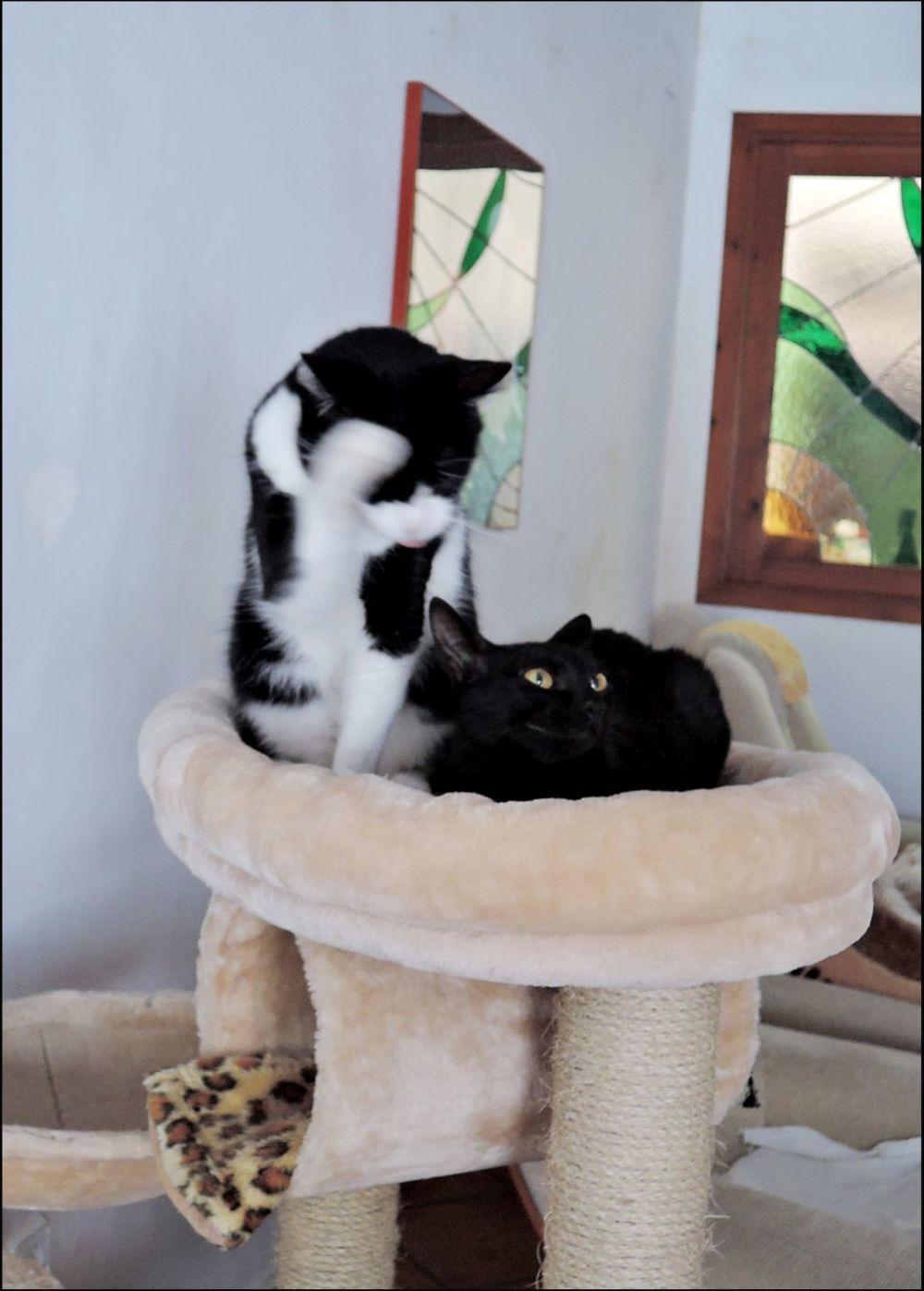 Felix &Mei