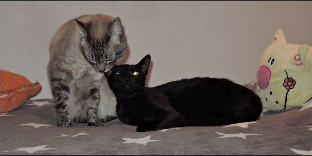 Kirin & Mei Good Friends ⋆ටᆼට⋆  ^ↀᴥↀ^