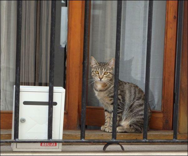 Tabby Kitten by The Window