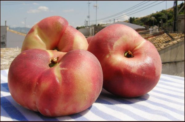 Paraguayos - Spanish Seasonal Fruits